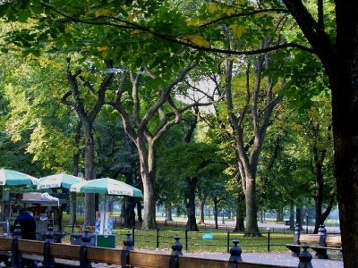 IMG 0176D Central Park trees w vendor's stand
