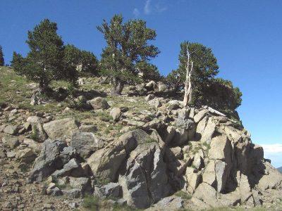 IMG_1514 rocky tree pile (ok)