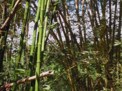 IMG_7341 bamboo and sky (nice)