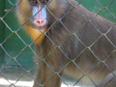 IMG_7532 baboon (ok)